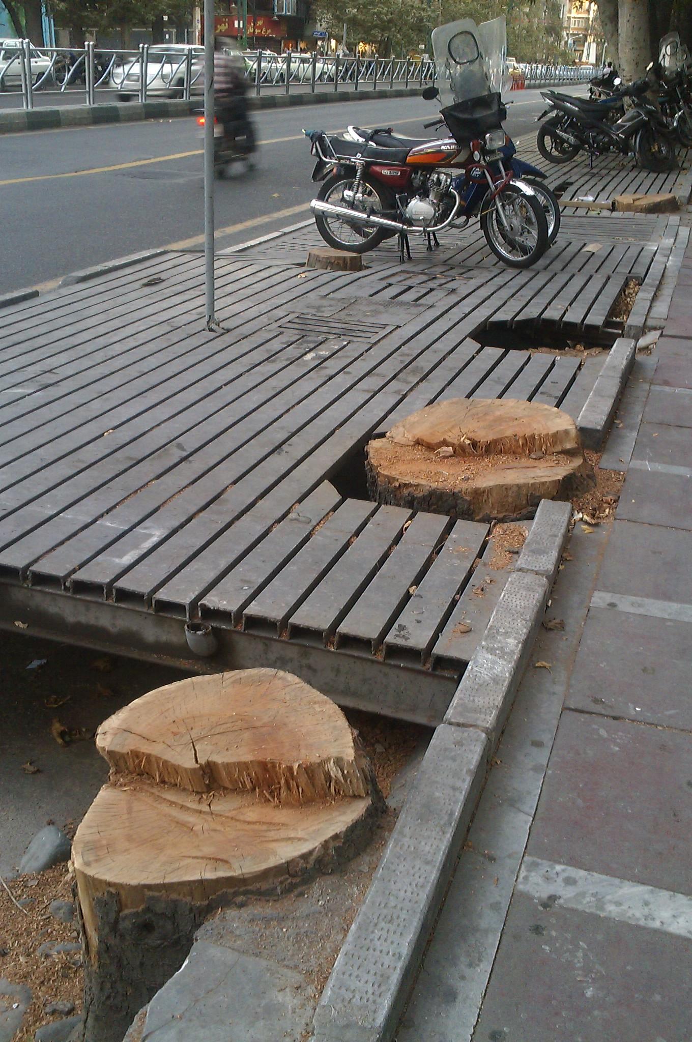 درختان ولیعصر در انتظار تیغ