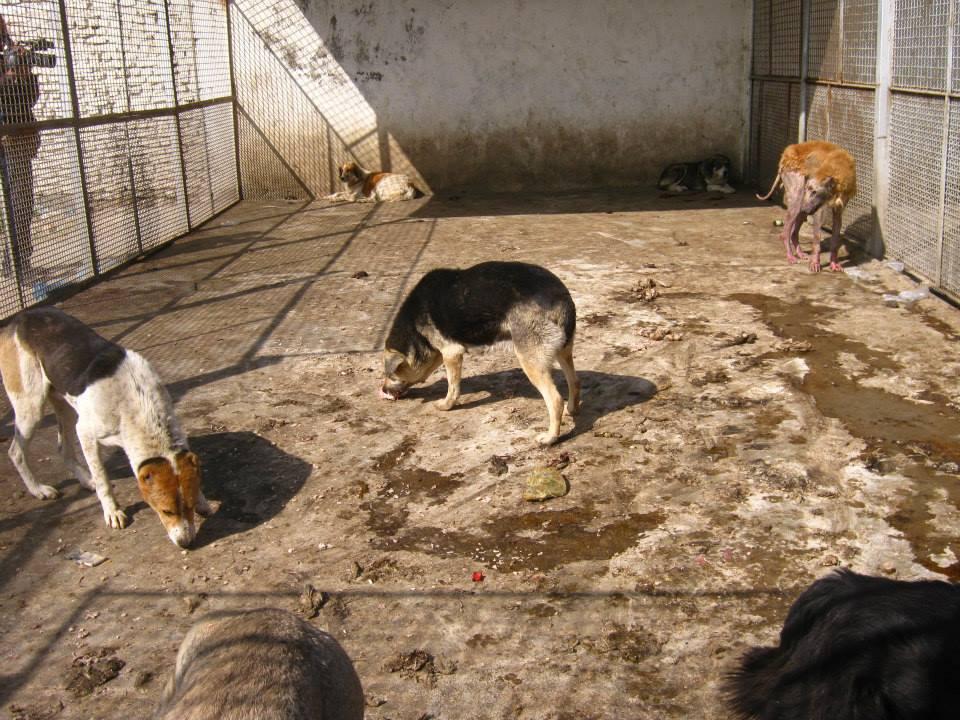 سگهای شهری در صف مرگ/ فرناز کمالی