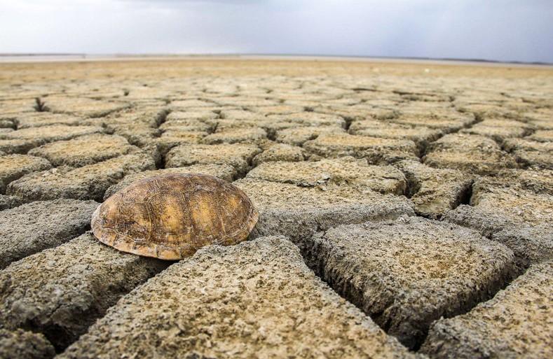 ترکمن صحرا و تالابهای به گل نشستهاش/ دانیال بابایانی