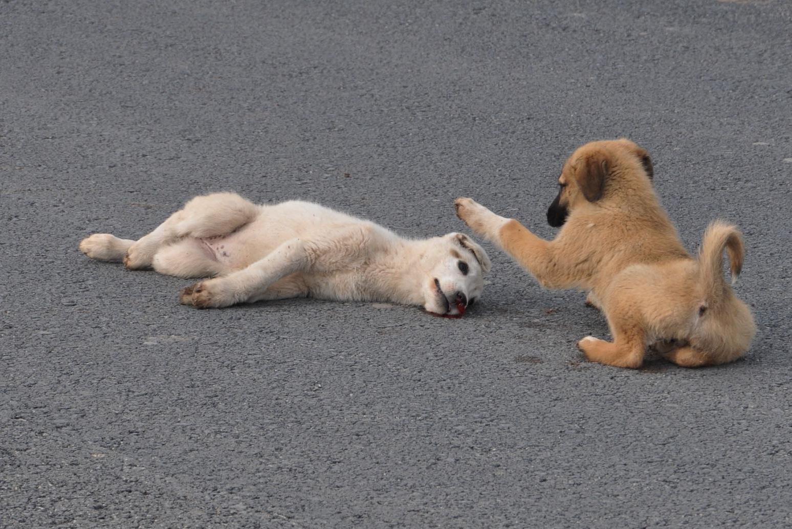 گفتگو با گردانندهی صفحهی واگذاری رایگان حیوانات خانگی در اینستاگرام/ سیاوش خرمگاه