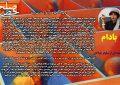 قطعه ادبی «بادام» – نوشته ای از نیلوفر فولادی