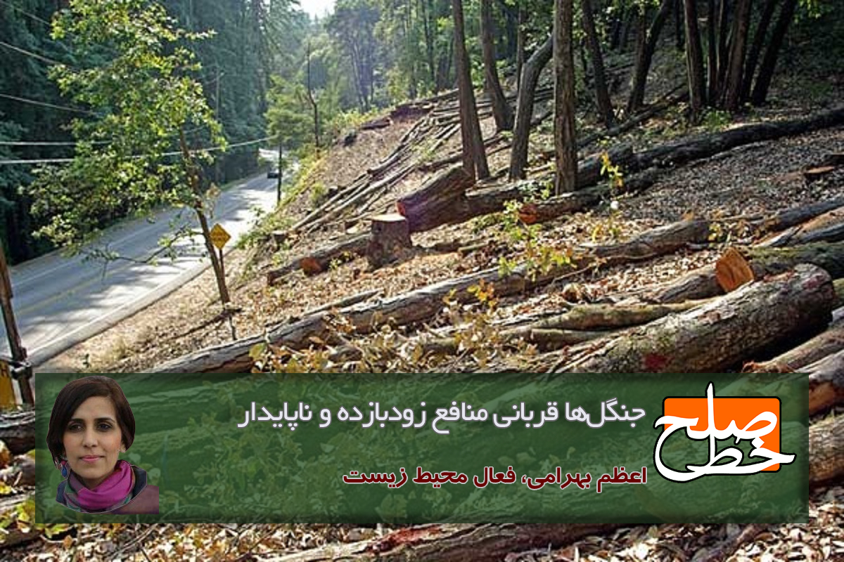 جنگلها قربانی منافع زودبازده و ناپایدار/ اعظم بهرامی